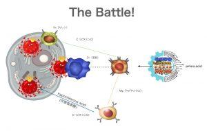 ウイルスが侵入したの時の防衛反応